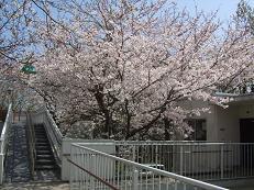 7棟 桜 009.jpg