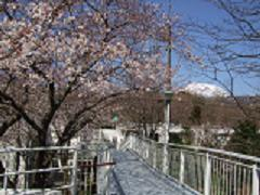 桜と大室山.JPG