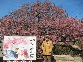 かじやの桜O.JPG