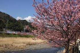 河津川.JPG