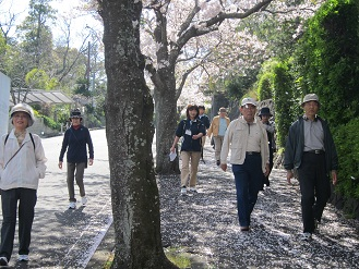 桜の木の下.JPG