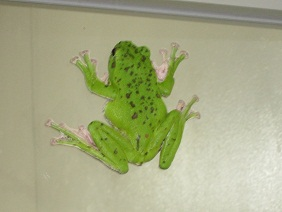 蛙.jpg