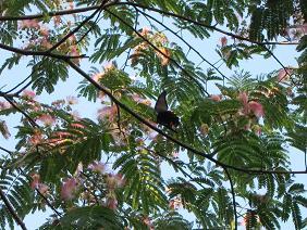 ねむの木、蝶.jpg