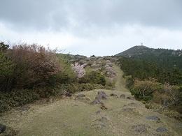 達磨山①.jpg