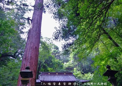 0-4 「八幡宮来宮神社」.jpg