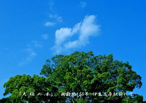0-7 「大楠の木」.jpg