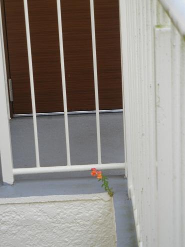 ドアの前.JPG
