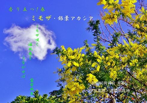 0-1 ミモザ.jpgのサムネール画像