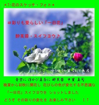 0-0 酔芙蓉・コメント.JPG