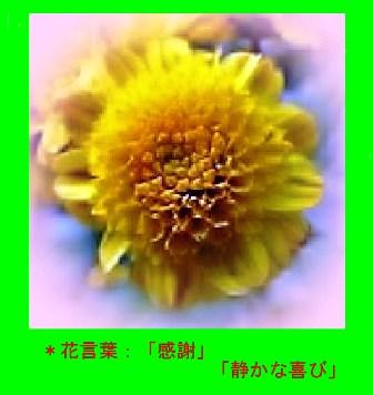 イソギク・0-4.JPG
