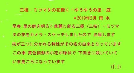 三椏・ミツマタの花開く! 2019.2. 雨水0-0 (1).jpg