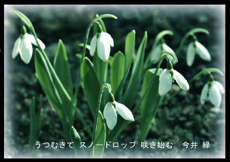 寒中見舞い!2019.1 大寒2019.01.26 (2).jpg