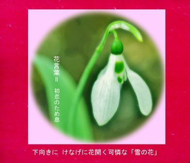寒中見舞い!2019.1 大寒2019.01.26 (3).jpg