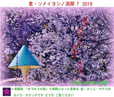 徳植様 里・ソメイヨシノ満開!2019 (1).JPG