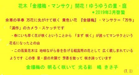 徳植様0-0 コメント マンサク 2019 (1).JPG