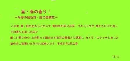 里・春の香り!-蕗の薹 2019.2. 立 春0-コメント.jpg