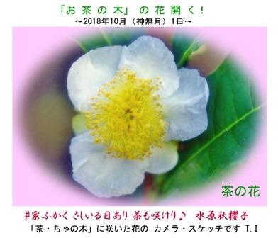 0-0 茶の花・ブログ  .JPG