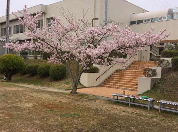 satonosakura2.JPG