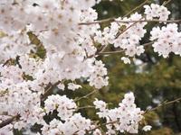 お花見ランチ④.jpgのサムネール画像のサムネール画像のサムネール画像のサムネール画像