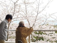 お花見ランチ⑤.jpgのサムネール画像