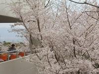 お花見ランチ③.jpg