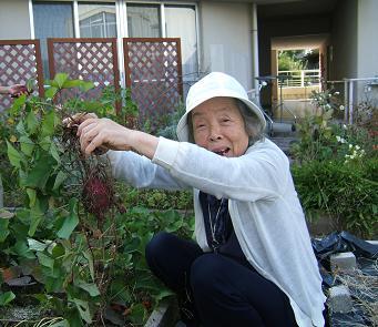 サツマイモの収穫A.JPG