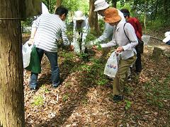 山菜摘み(5).JPG