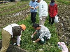山菜摘み090420(3).JPG