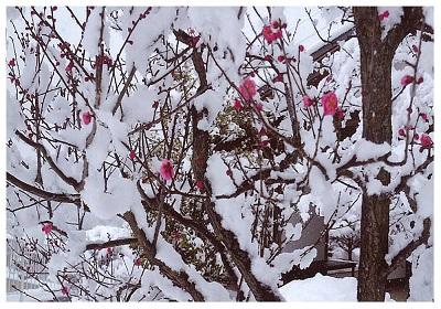 歌集用冬2.jpg