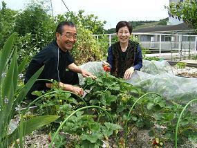 立派な苺の収穫090516.JPG