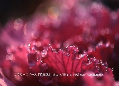 花③.jpg