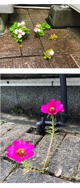 花の命〇●●.jpg