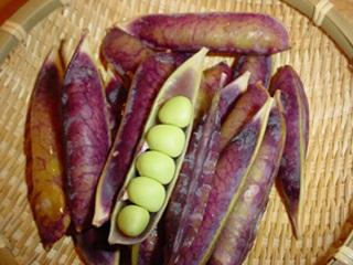 赤エンドウ豆3.jpg