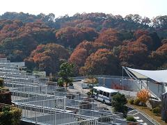里の秋.JPG