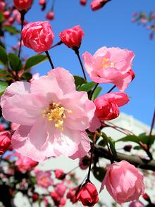 100409里の花②.JPG