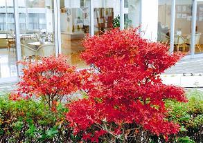20101208紅葉B.JPG