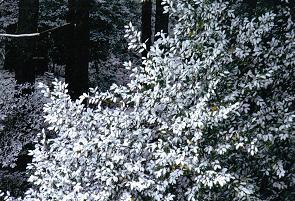 20110104里の雪景色3.JPG