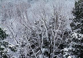 20110105里の冬景色1.JPG
