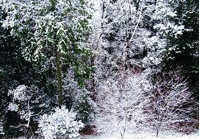 20110105里の雪景色2.JPG