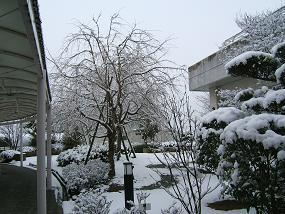 20110211雪景色(3).JPG