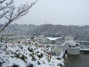 20110214雪景色(1).JPG
