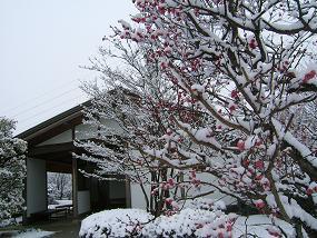 20110214雪景色(2).JPG
