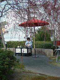 20110407桜茶屋1.JPG