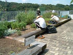 20110723気まぐれ花壇の草引き1.JPG