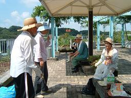 20110723気まぐれ花壇の草引き2.JPG
