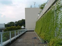 20110809グリーンカーテン.JPG