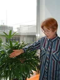 20120517観音竹.JPG
