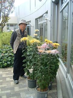 20121108菊1.JPG