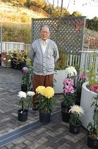 2013.11.14菊.jpg