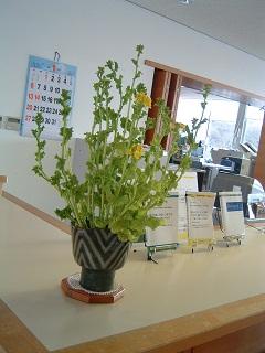20130120菜の花②.jpg